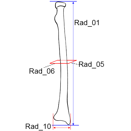 Length what is bone pressed Penis size